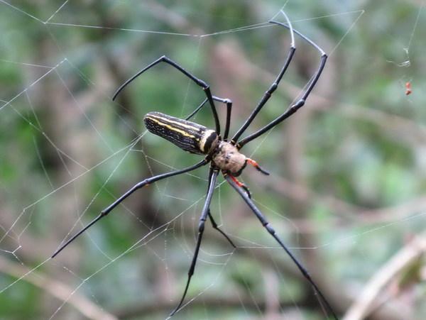 人面蜘蛛14[文邦作品]