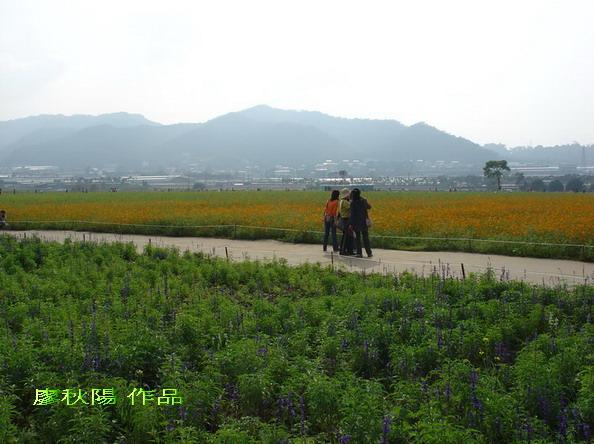 新社花海祭:紫花區