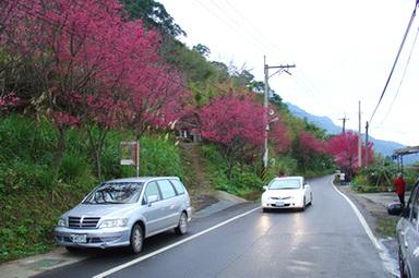 羅馬公路溪口部落櫻花[調]01.jpg