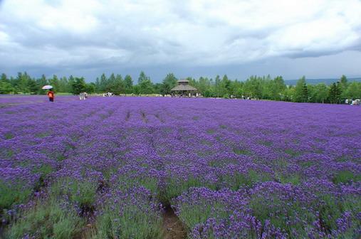 富田花園農場1.jpg