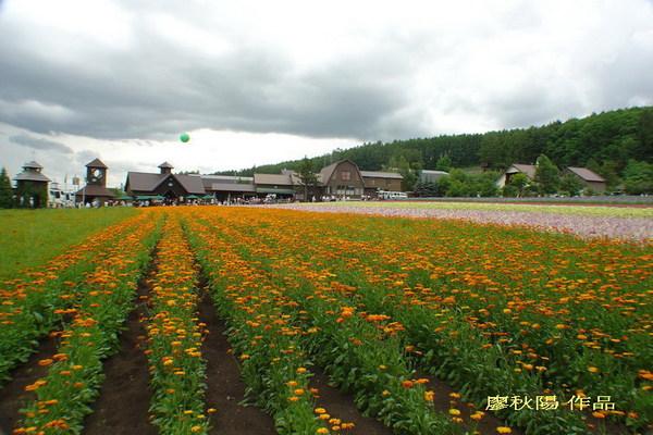 富田花園農場2.jpg