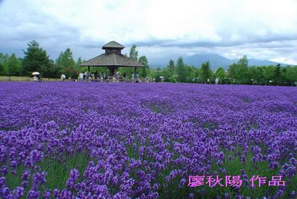 富田花園農場3.jpg