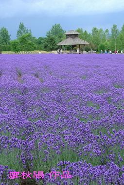 富田花園農場4.jpg