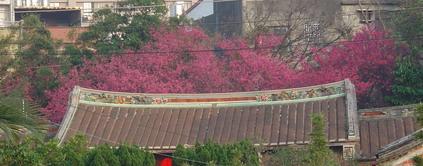 紅樓櫻花[調]05.jpg