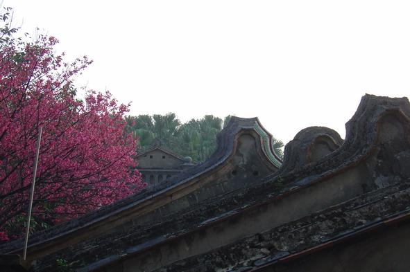 紅樓櫻花[調]03.jpg