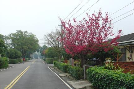 石門水庫櫻花[調]06.jpg