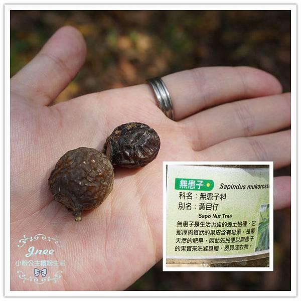 DSC09404_副本.jpg