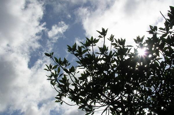 紅樹林的天空