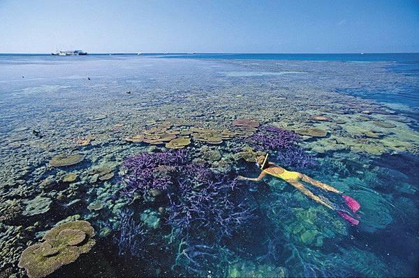 世界最佳旅地!澳洲「大堡礁」
