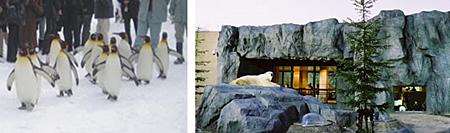 【懶人包】只有北海道冬季才玩得到的10大體驗