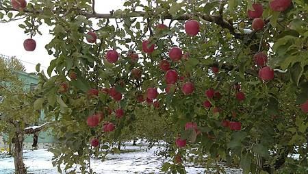 1111新幹線,青森蘋果,十和田湖_3514.jpg