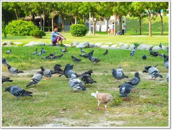 高雄中央公園18.jpg