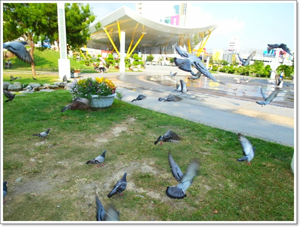 高雄中央公園19.jpg