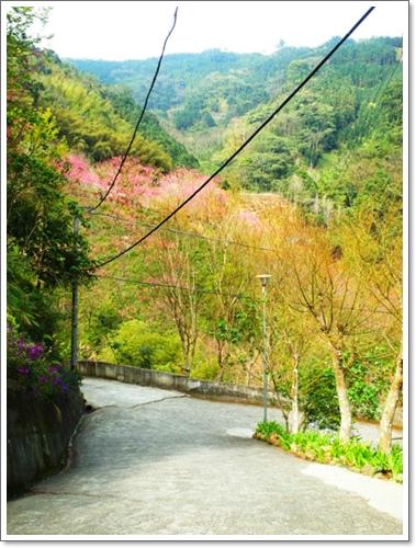 山行玫瑰15.jpg
