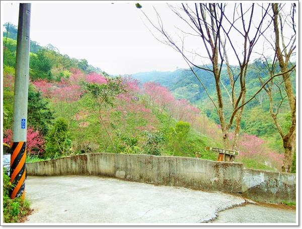 山行玫瑰35.jpg
