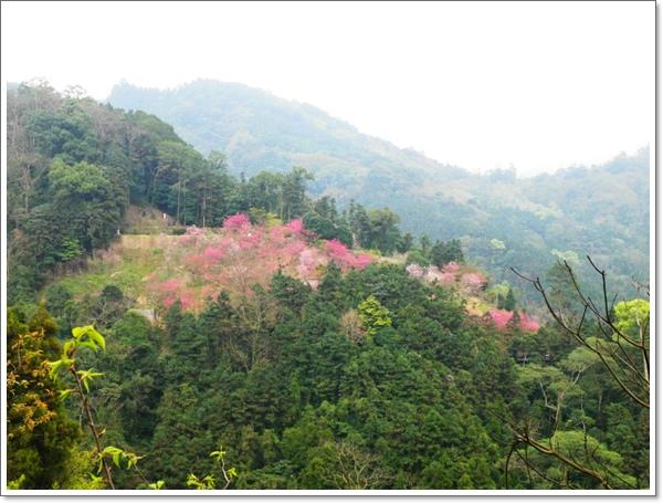 山行玫瑰39.jpg