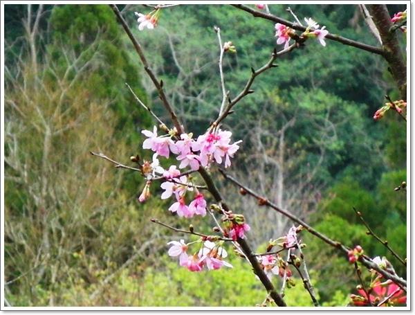 山行玫瑰47.jpg