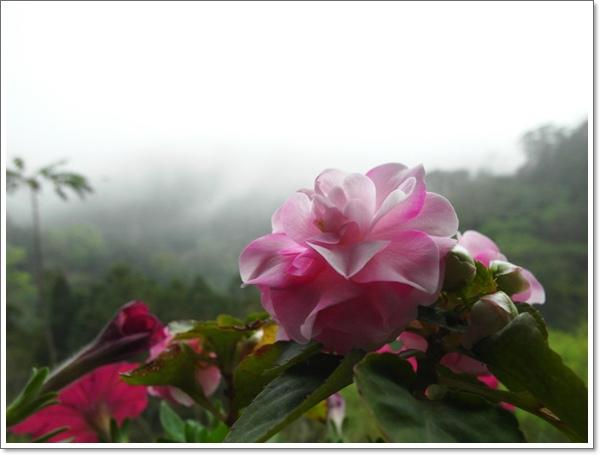 山行玫瑰51.jpg