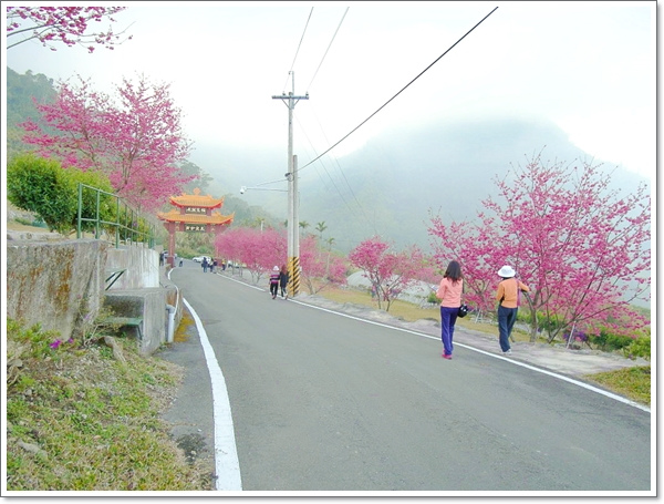 阿里山櫻花08.jpg