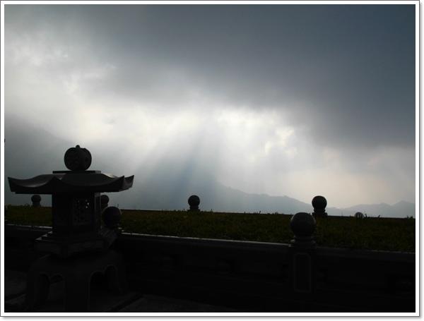 阿里山櫻花13.jpg