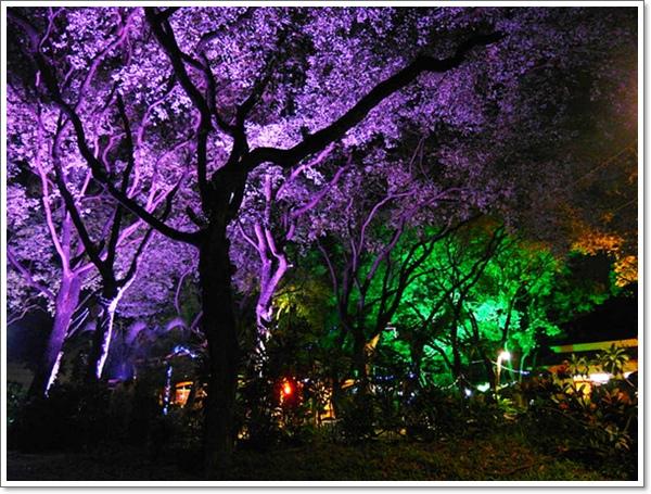 綠光森林02.jpg
