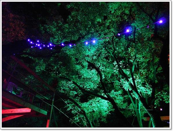 綠光森林08.jpg