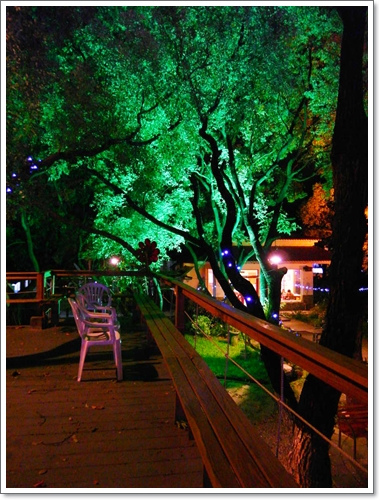 綠光森林16.jpg