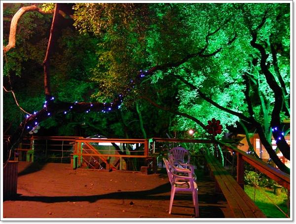 綠光森林19.jpg