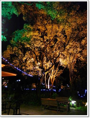 綠光森林21.jpg