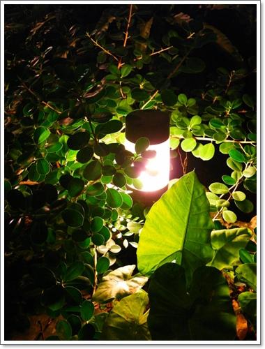 綠光森林24.jpg