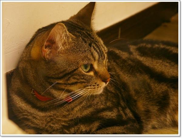 貓吐司29.jpg