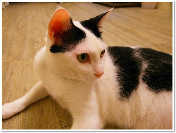 貓吐司31.jpg