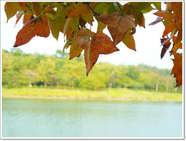 澄清湖28.jpg