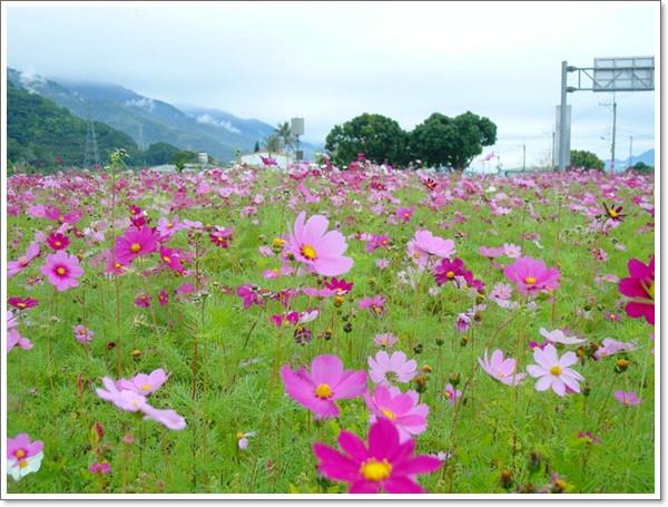 關山花海09.jpg