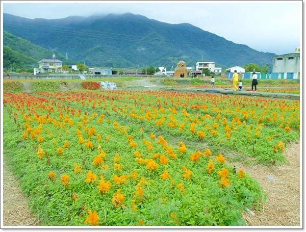 關山花海15.jpg