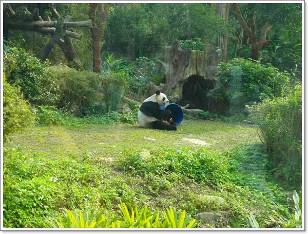 木柵動物園15.jpg