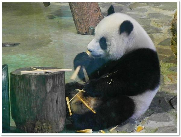 木柵動物園16.jpg