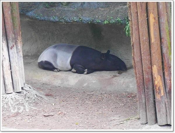 木柵動物園20.jpg