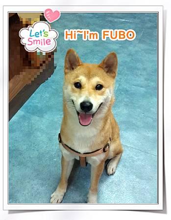 fubo_1101
