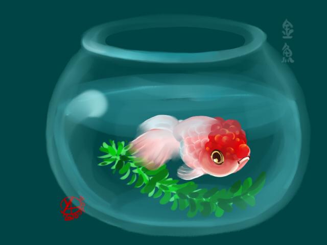 魚缸-.jpg