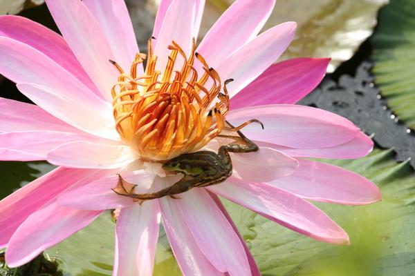 2006-11-18 植物園 067.jpg