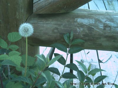 20090516-18塔塔加三天二夜 (15).JPG