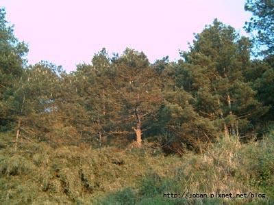 20090516-18塔塔加三天二夜 (19).JPG