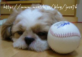 我爸是超級棒球迷,我媽是棒球白痴,我好為難...
