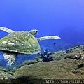 Turtle 001.jpg