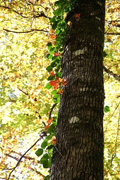 138 Xmas TREE WOW.jpg