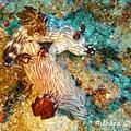 海兔.jpg