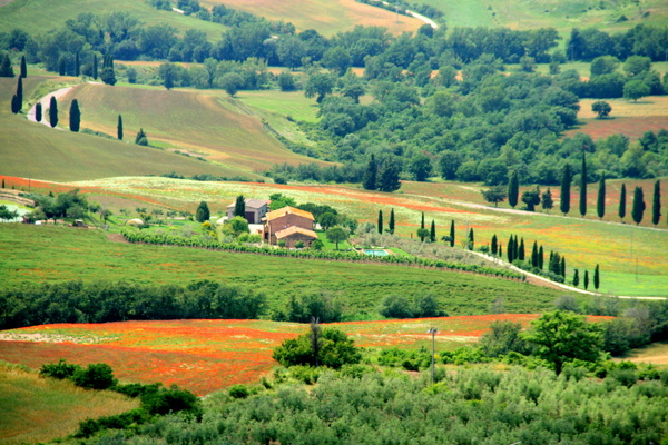 Looking Toward Pienza 2.jpg