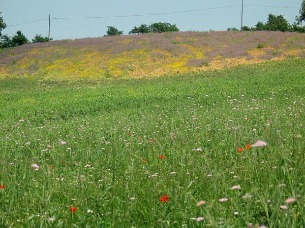 Country Field 30.jpg
