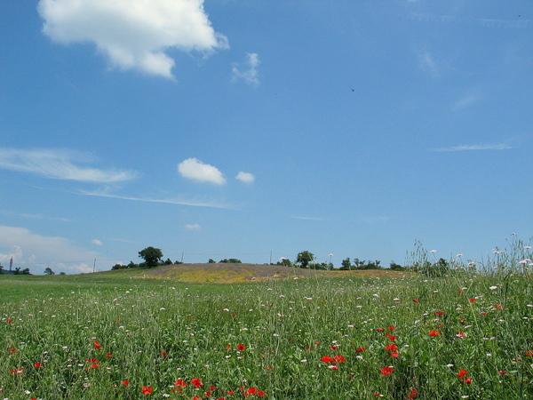 Country Field 31.jpg